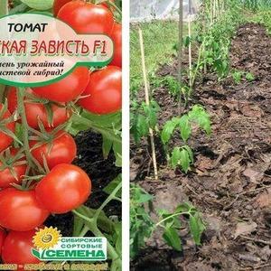 Сорт помидоров с говорящим названием - томат