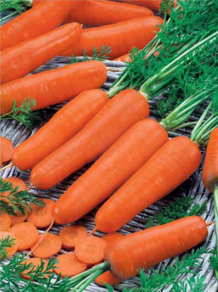 морковь амстердамская посадка и уход
