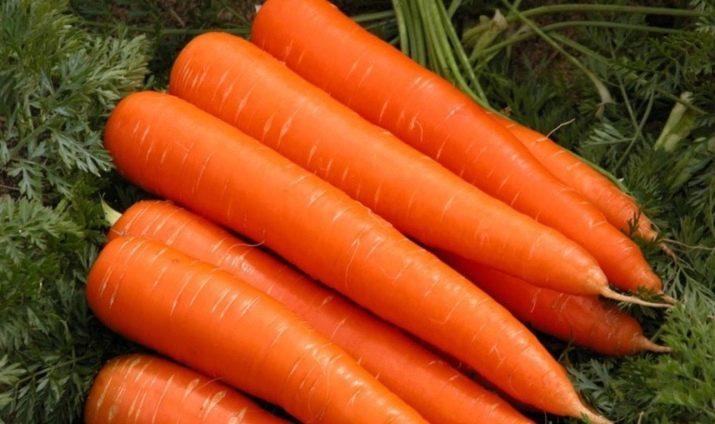 характеристика моркови тушон