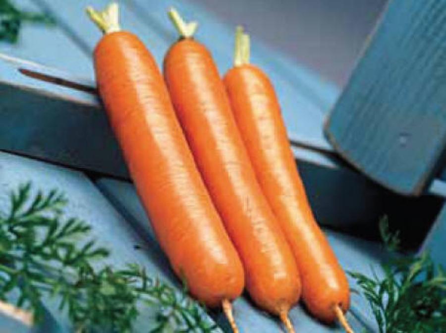 урожайность моркови дордонь