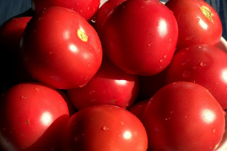 урожай томата красным красно