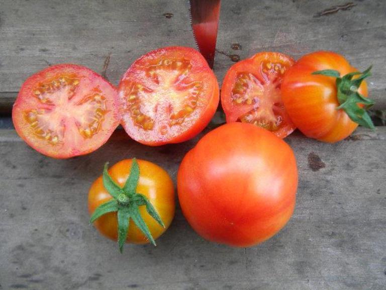 вкус томата санька