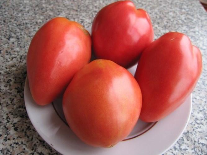 вкус томатов петруша огородник