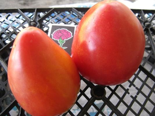 достоинства томатов батяня