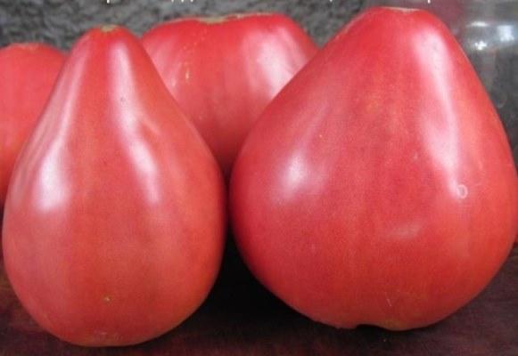 крупные томаты батяня