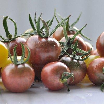 томат черная жемчужина