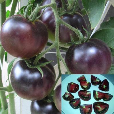 плоды томата черный жемчуг