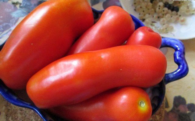 помидоры казанова