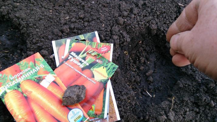 посев моркови витаминная