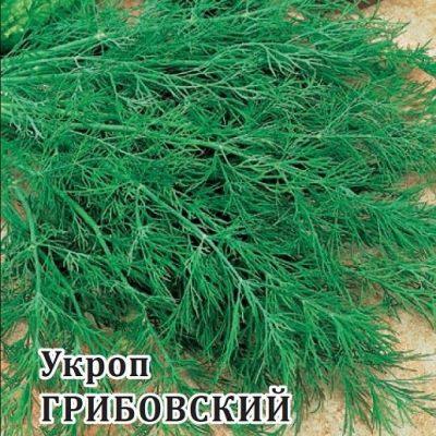укроп на зелень грибовский