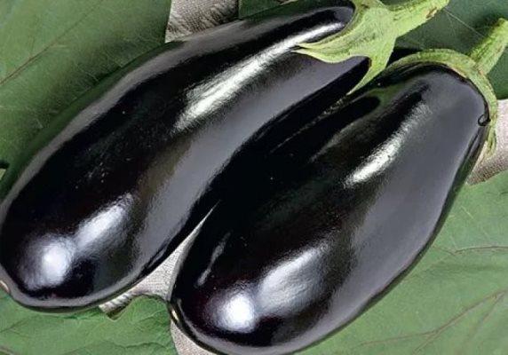 фото баклажана черный принц