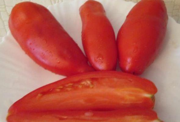 вкус томатов жемчужина сибири