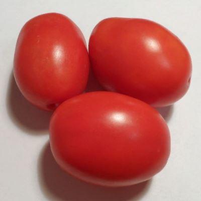 сорт томата жемчужина сибири