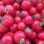 характеристика томата розовая жемчужина