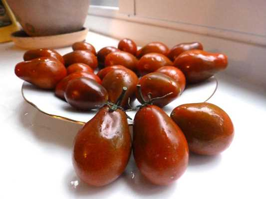 томат шоколадный жемчуг