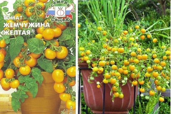 урожай томата желтая жемчужина