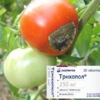 трихопол от фитофторы на помидорах отзывы