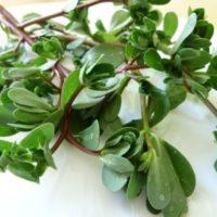 лечебные свойства сорняка портулака