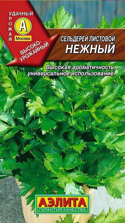 сельдерей нежный листовой фото