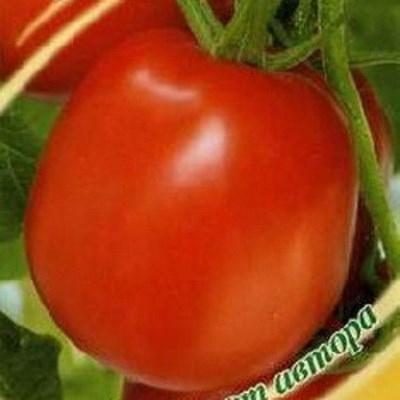 томаты новичок делюкс