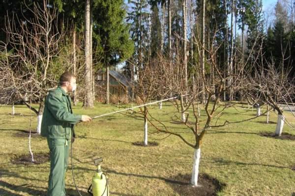 обработка груши осенью от вредителей и болезней