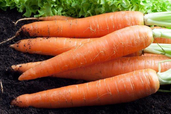 морковь карамелька отзывы фото