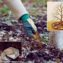 чем подкормить грушу осенью чтобы плодоносила