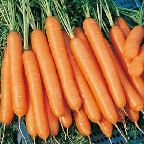 применение моркови император
