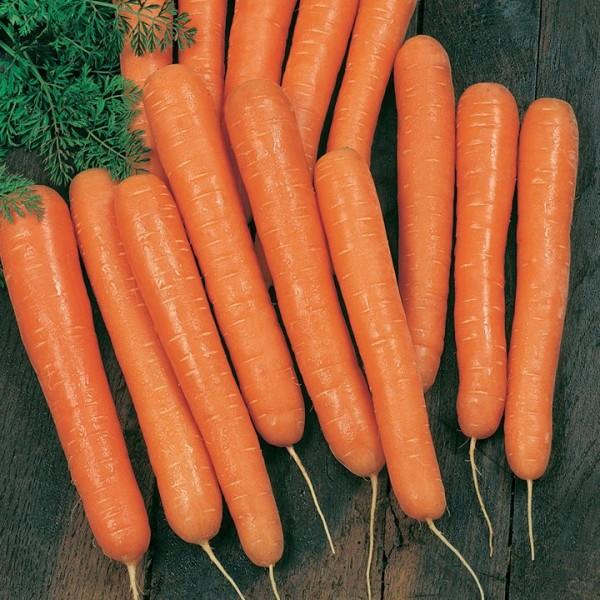 морковь амстердамская на столе