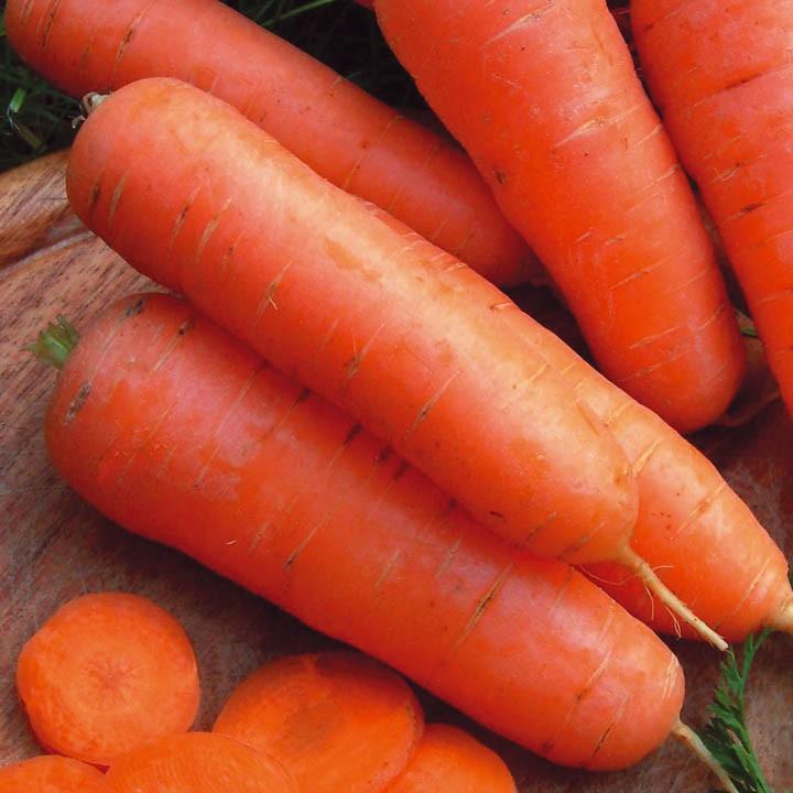 достоинства моркови амстердамская