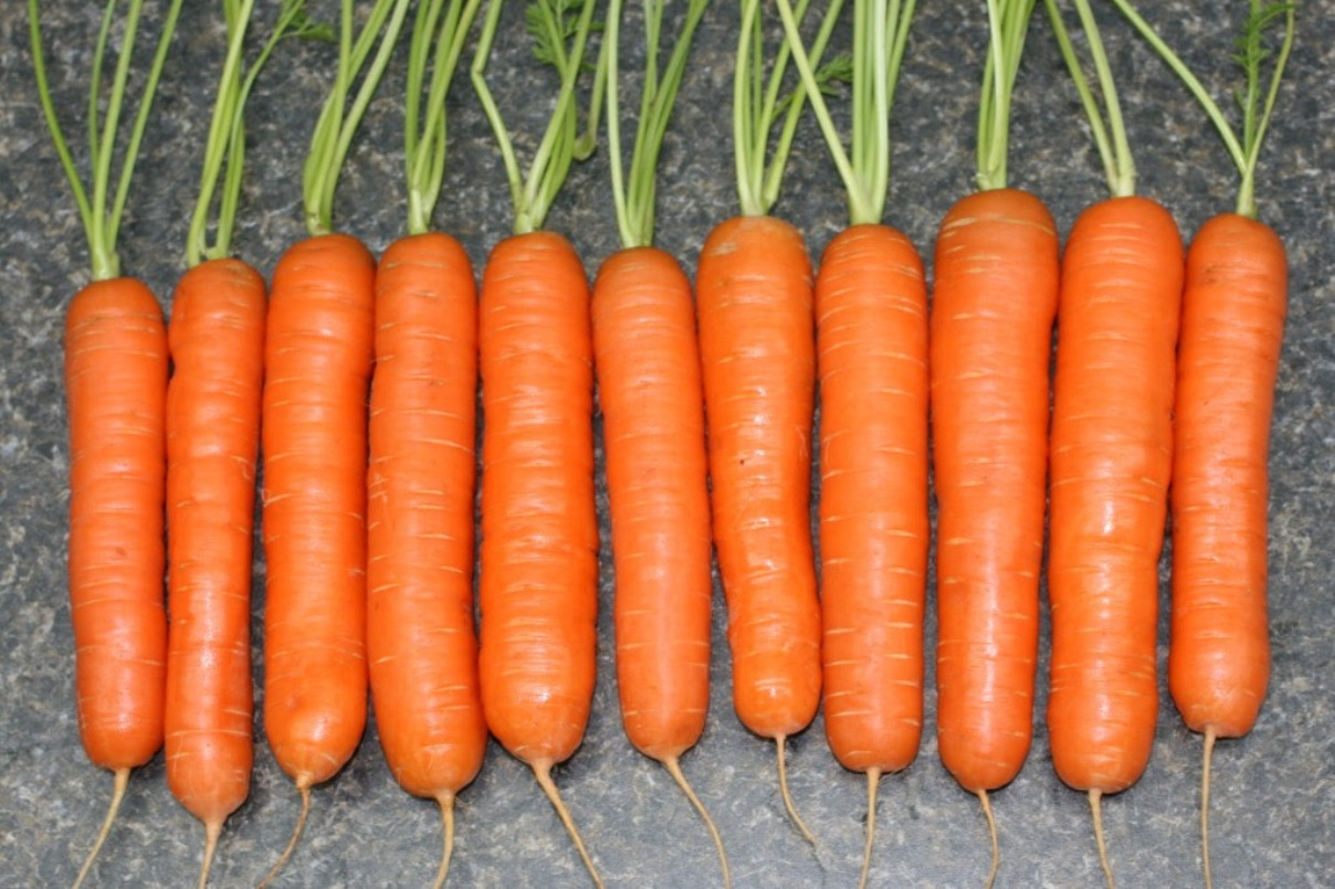 урожайность моркови тушон