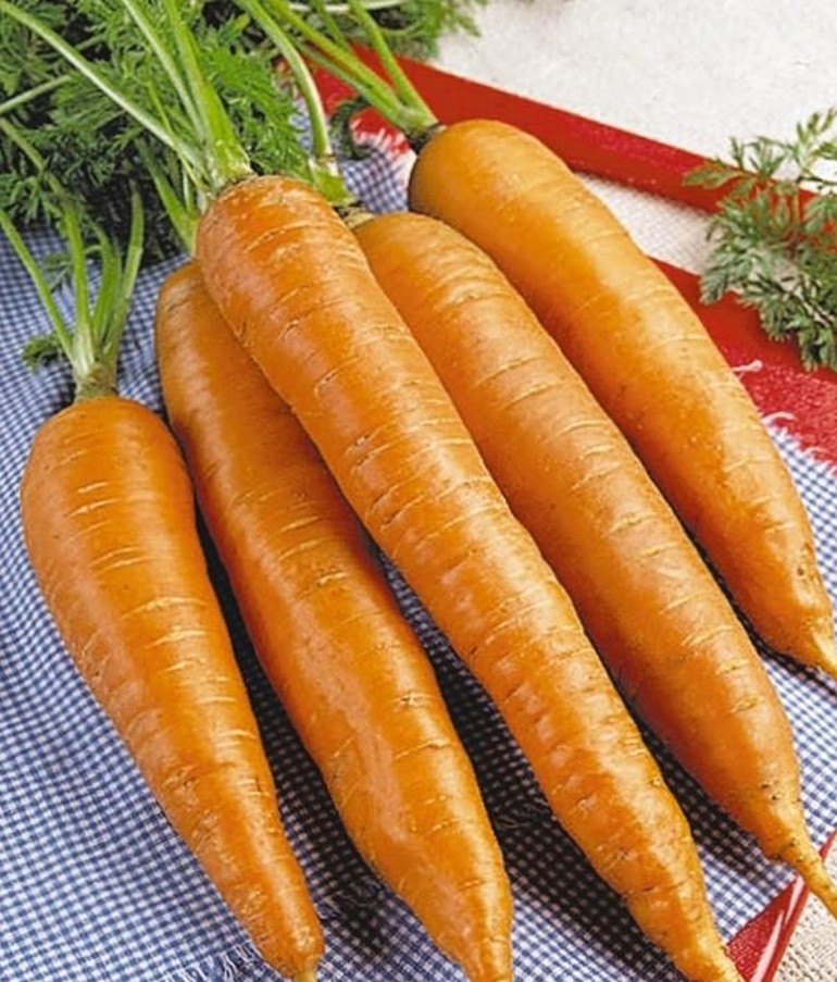 описание моркови детская сладость