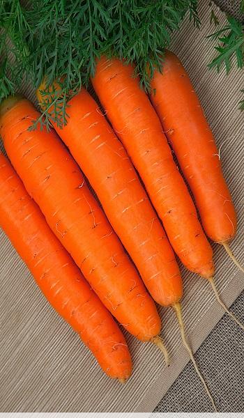 урожайность моркови детская