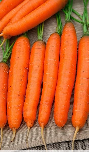 достоинства моркови детская сладкая
