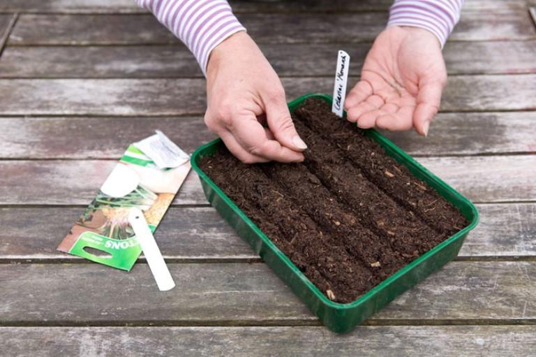 Сельдерей листовой сорта для посадки в открытый грунт без рассады