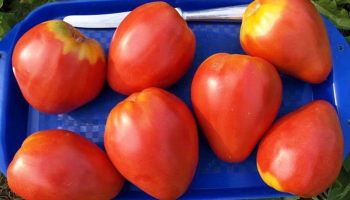 достоинства томата петруша огородник