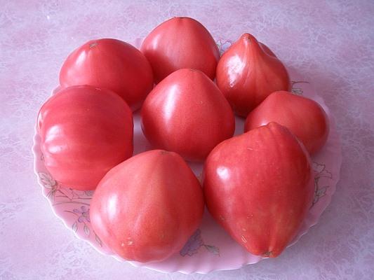 применение помидоров батяня