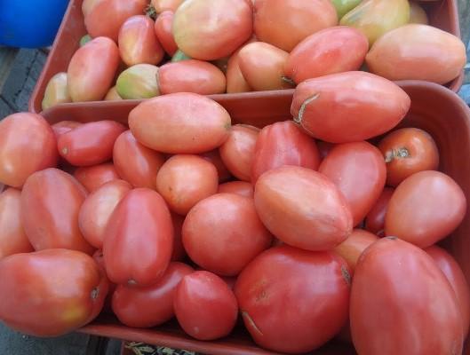 урожайность томата петруша огородник