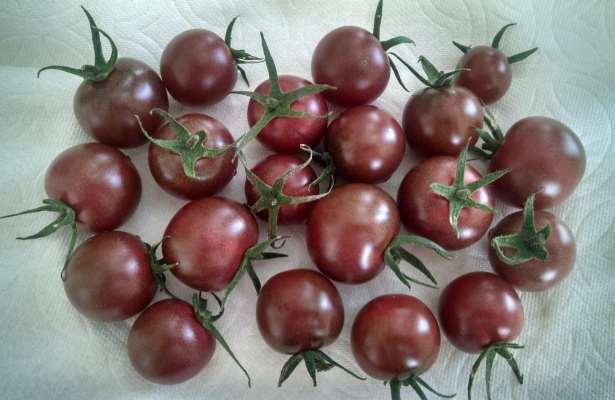 черные томаты черная жемчужина