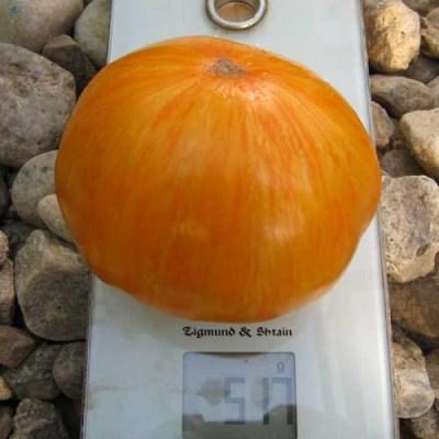 вес томата жемчужина джанет