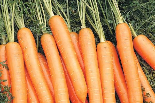 морковь балтимор