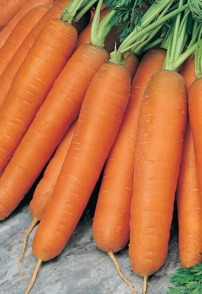 плоды моркови балтимор