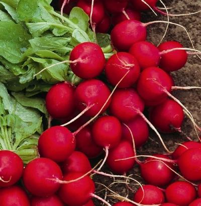 плоды редиса селеста