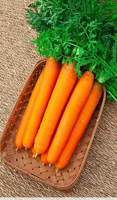 применение моркови самсон