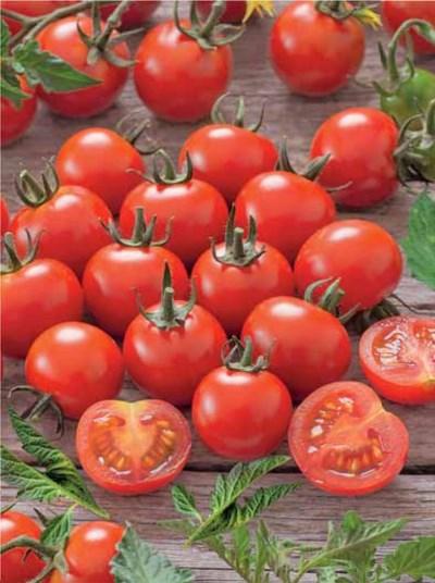 плоды томата красная жемчужина