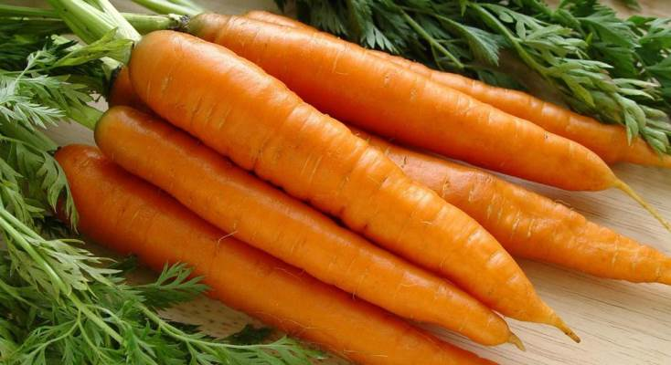 применение моркови канада f1