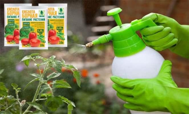 опрыскивание томатов борной кислотой