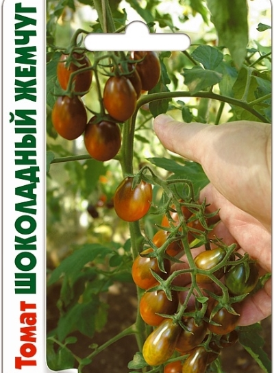 сорт томата шоколадный жемчуг