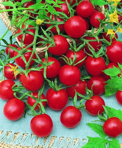 томаты черри