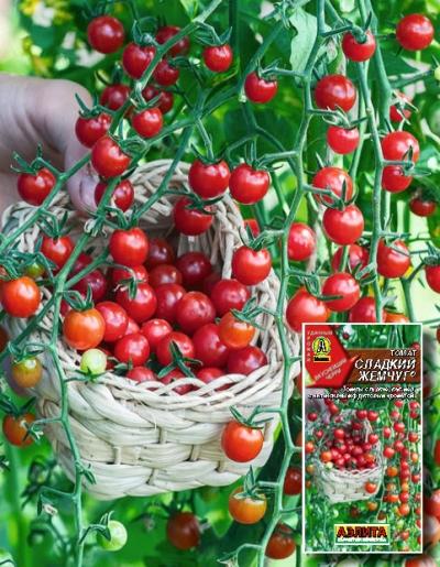 томат сладкий жемчуг